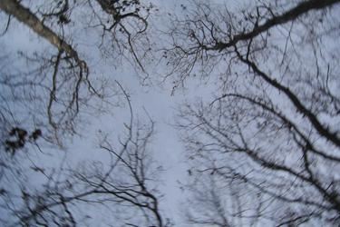 111230_trees.jpg