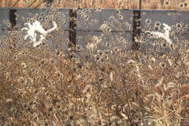 120104_dead_flowers.jpg