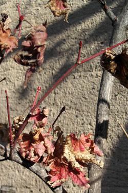 120114_dead_leaves.jpg