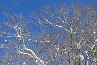 120214_tree.jpg
