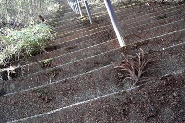 120308_long_steps.jpg