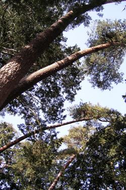 120312_trees.jpg