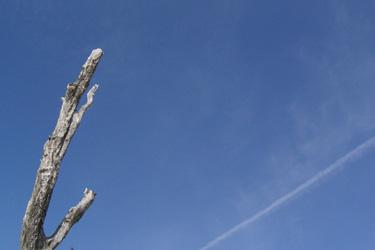 120317_dead_tree.jpg
