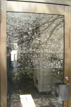 120406_sakura_apartment.jpg