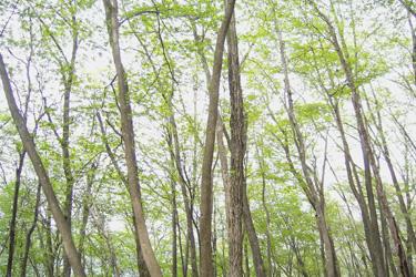 120429_forest.jpg