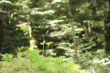 120601_forest.jpg