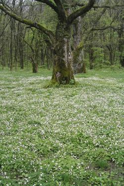120604_white_flowers.jpg