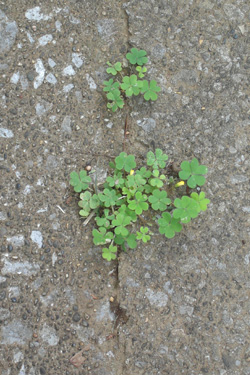 120611_natural_planter.jpg