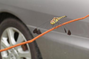120613_dragonfly.jpg