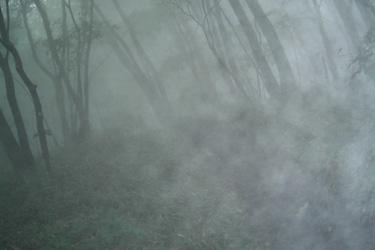120614_foggy_forest.jpg