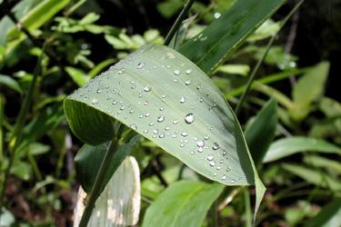 120619_rain_drops.jpg
