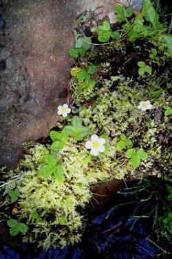 120624_natural_planter.jpg
