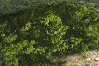 120703_green.jpg