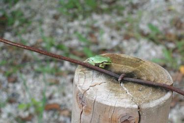 120708_frog.jpg