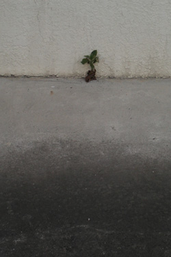120717_natural_planter.jpg