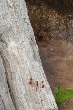 120801_dragonfly.jpg