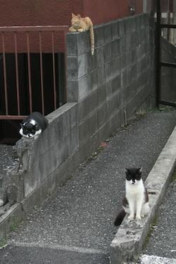 120803_cats.jpg