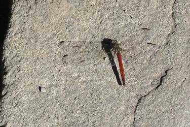 120824_dragonfly.jpg