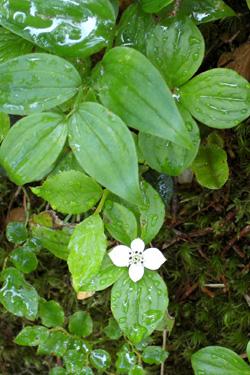120830_white_flower.jpg