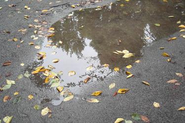120920_fallen_dead_leaves.jpg