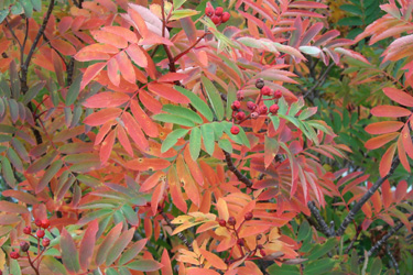 120927_autumn_leaves.jpg