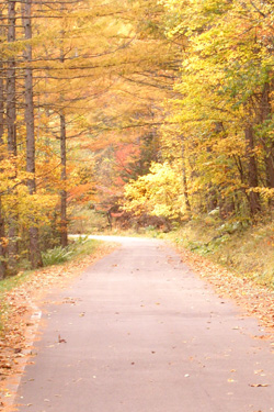 121003_autumn_road.jpg