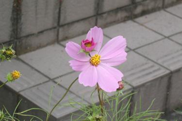 121013_flower_cup.jpg