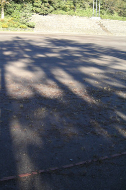 121018_long_shadows.jpg