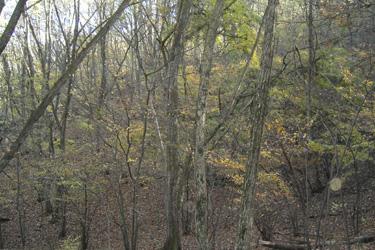 121118_forest.jpg