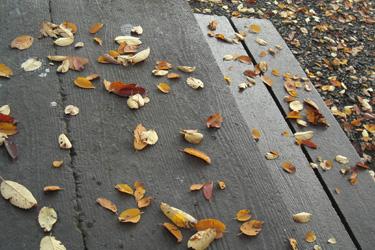 121123_fallen_leavesb.jpg