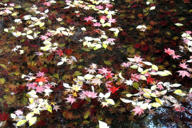 121209_floating_leaves.jpg