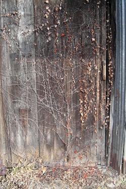 130114_old_door.jpg