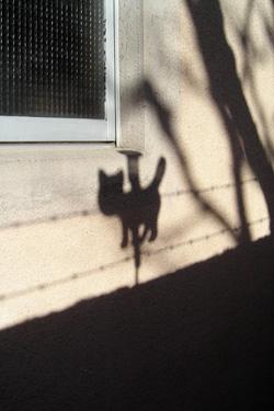 130130_cat.jpg