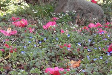 130314_spring_flowers.jpg