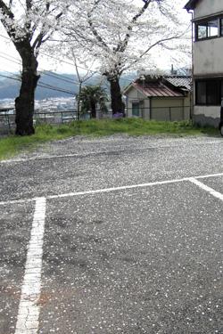 130410_sakura_parking.jpg