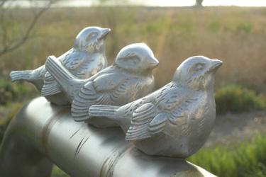 130430_birds.jpg