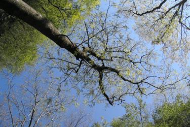 130501_trees.jpg