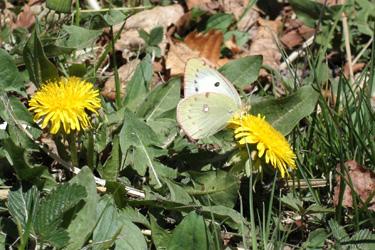 130517_butterfly.jpg