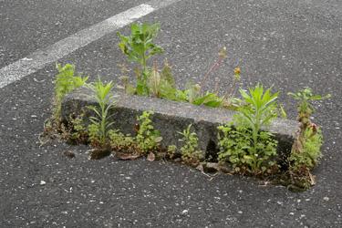 130519_natural_planter.jpg