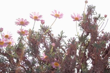 130526_flowers.jpg