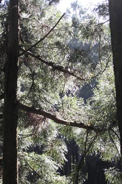 130529_trees.jpg