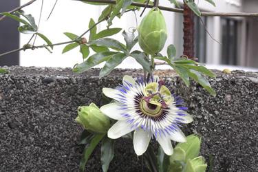 130614_strange_flower.jpg