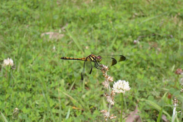 130619_dragonfly.jpg
