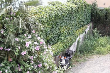 130621_natural_planter.jpg