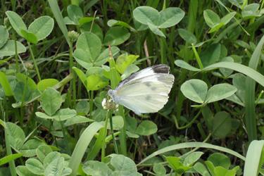 130622_butterfly.jpg