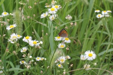 130712_butterfly.jpg