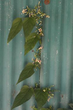 130716_natural_planter.jpg