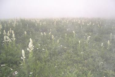 130723_fog.jpg