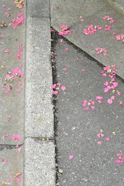 130816_fallen_flowers.jpg
