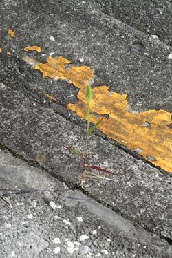 130916_natural_planter.jpg